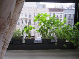 Растения дома на балконе