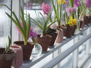 Домашние растения зимой