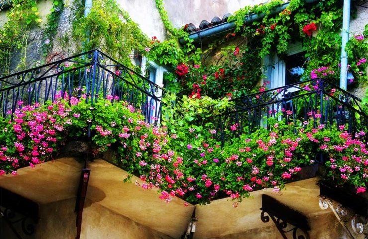 Озеленение балкона и лоджии