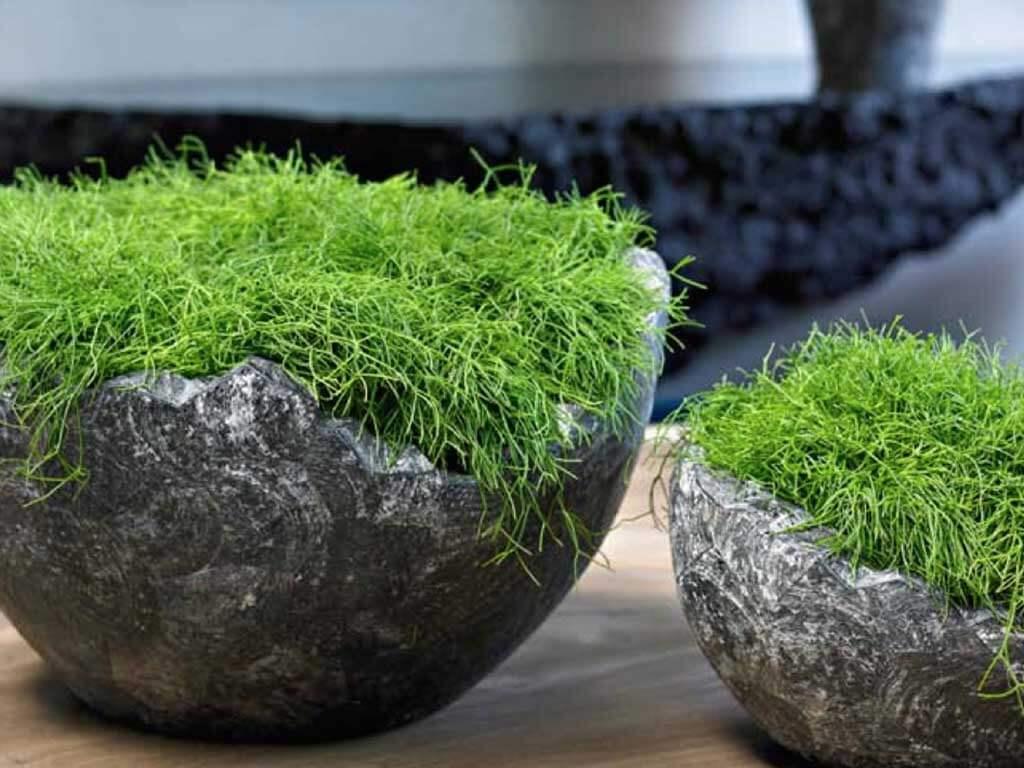 Озеленение интерьера. Виды цветов и их свойства