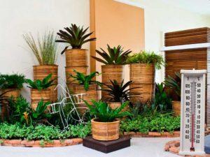 Подготовка домашних растений к весне