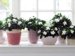 Растения и цветы в интерьере