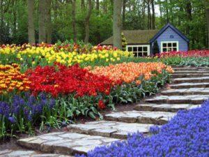 Цветы на приусадебном участке