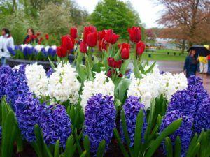 Красивые садовые цветы