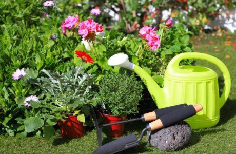 Майские работы в саду