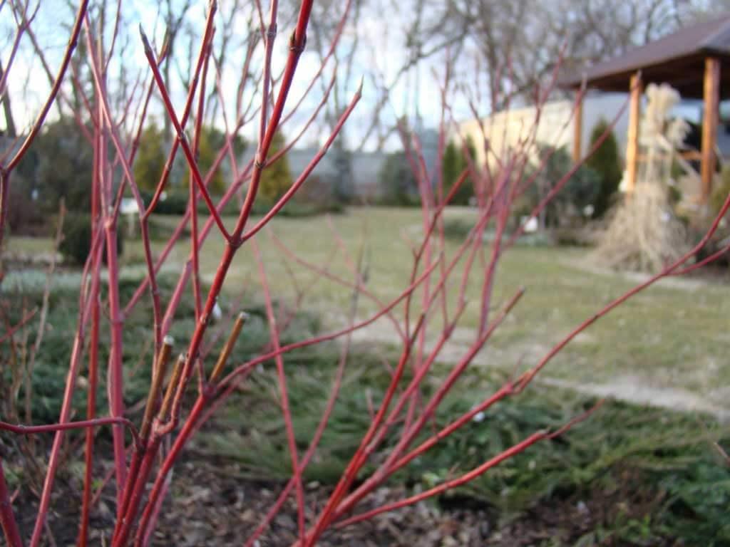 Садоводу на заметку – мартовские приметы