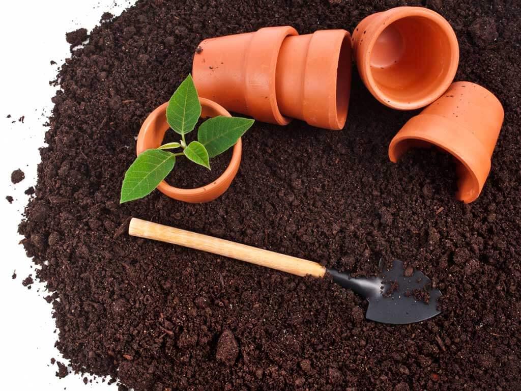 Когда и в какую емкость лучше пересадить растение?
