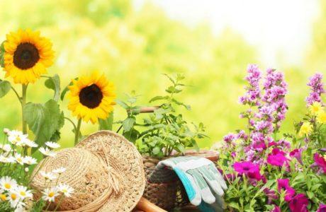 15 советов для садоводов