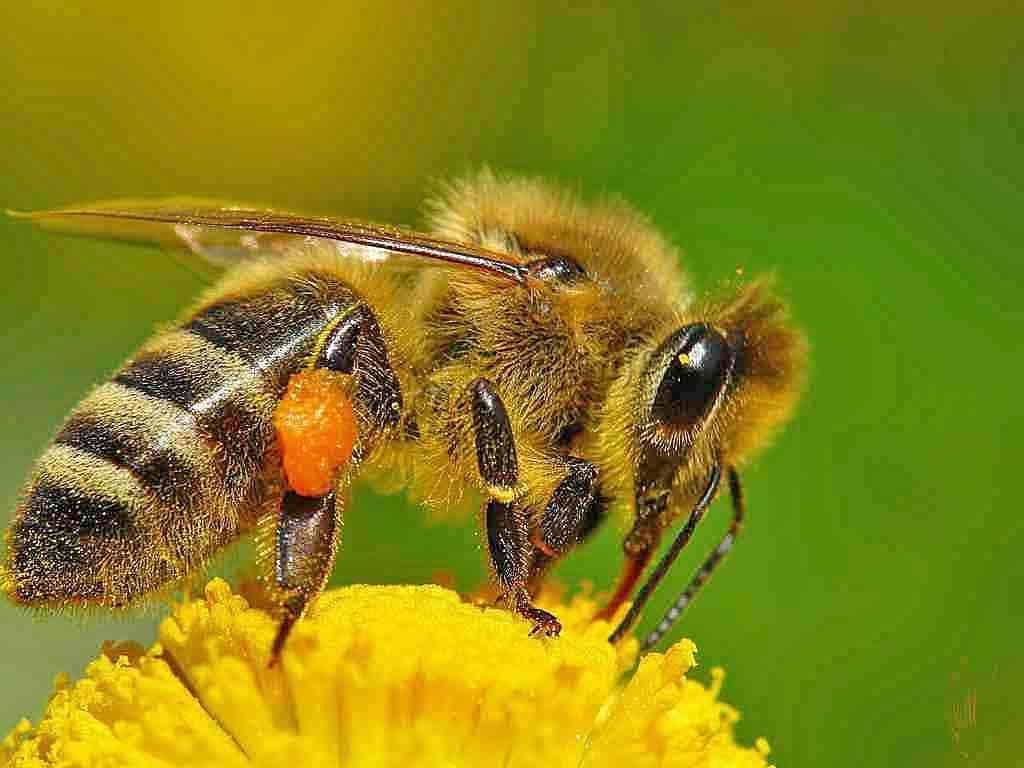 Как избежать нападения пчел?