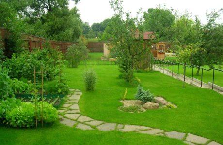 Где купить лучший газон для своего участка?