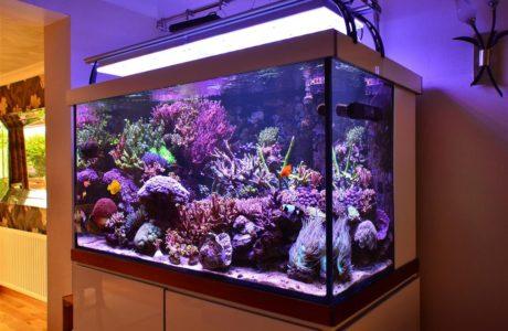 Компрессоры для аквариумов