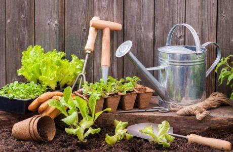 Статьи для сада и огорода