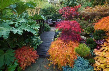 7 кустарников, которые украсят сад осенью