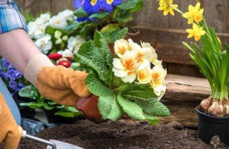 Весенние цветочные посевы в грунт: красота без хлопот