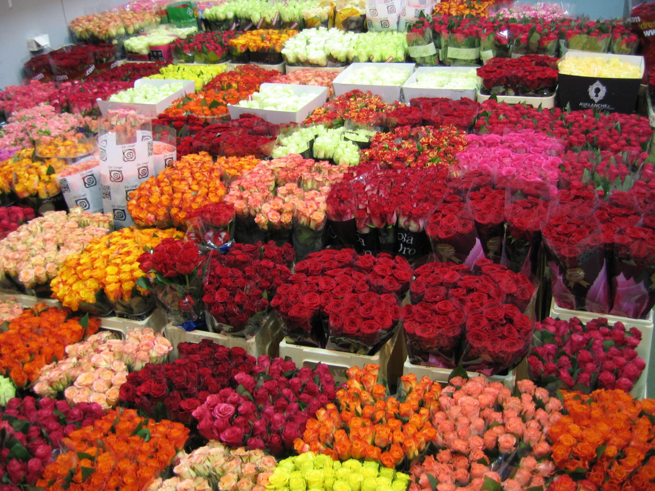 Оптовая база цветов