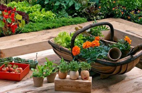 Полезные статьи для садоводов