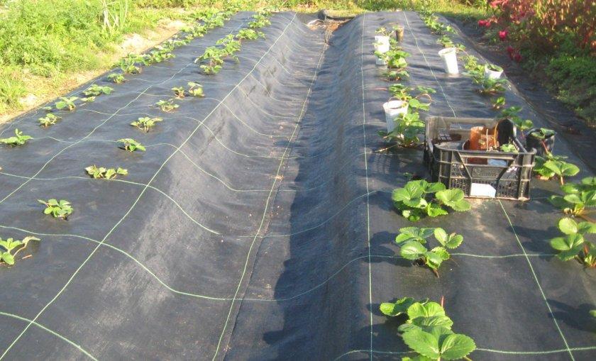 Агроволокно и его польза для выращивания культур