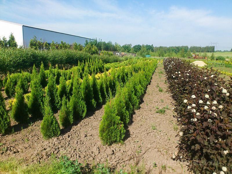 Компания Ветроград. Поставка растений